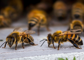 Bee-&-Wasp-Removal