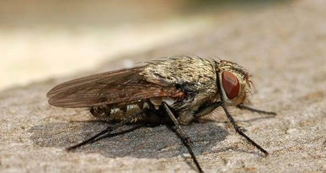 Tips To Avoid House Flies In Homes