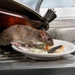 What-Foods-Attract-The-Rodents- ASM Pest Control