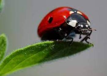 Ladybugs And Sow Bugs Control In Surrey